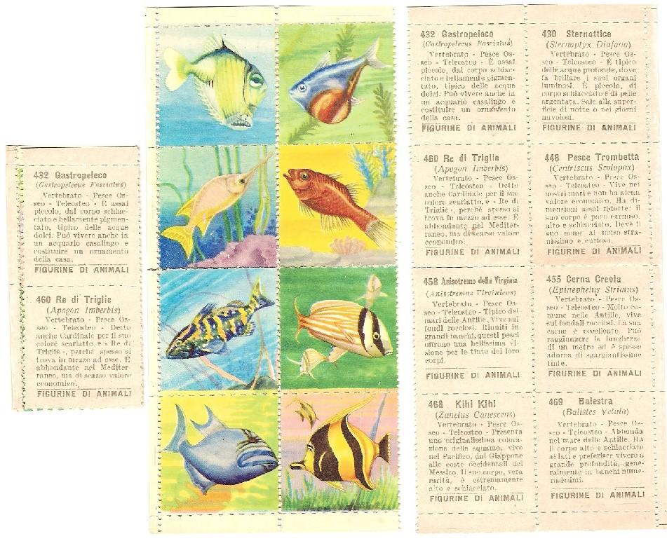 ANIMALI-RACCOLTA ANIMALI-LAMPO 1964-FIGURINA a scelta -STICKER-Recuperata 1//210